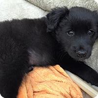 Adopt A Pet :: McKinney - San Diego, CA