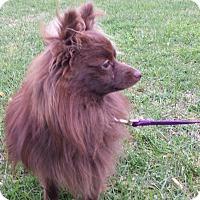 Adopt A Pet :: RALPHIE - Cranston, RI