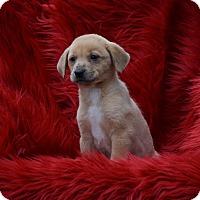 Adopt A Pet :: Morisot - Groton, MA