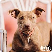 Adopt A Pet :: Nea - Portland, OR