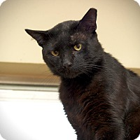 Adopt A Pet :: Panther - San Antonio, TX