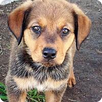 Adopt A Pet :: Jasper - Waller, TX