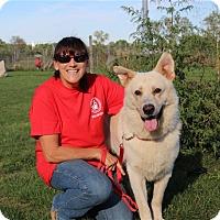 Adopt A Pet :: Buck - Elyria, OH