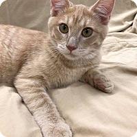 Adopt A Pet :: Bot - Maryville, MO
