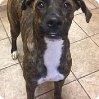 Adopt A Pet :: Lucky 5307 - Joplin, MO