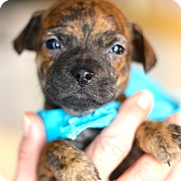 Adopt A Pet :: Marvin - West Grove, PA