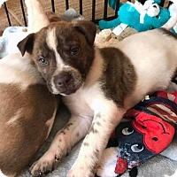 Adopt A Pet :: Edgar - Charlotte, NC