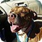Adopt A Pet :: Sally