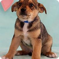 Adopt A Pet :: Lang - Waldorf, MD