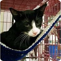 Adopt A Pet :: Mickey - Thousand Oaks, CA