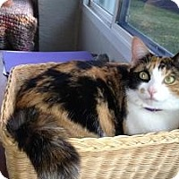 Adopt A Pet :: Patches - Vero Beach, FL