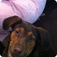 Adopt A Pet :: Doctor aka Charlie - McKeesport, PA