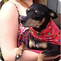 Adopt A Pet :: Miller - Gilbert, AZ