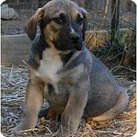 Adopt A Pet :: Buck - Staunton, VA