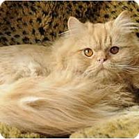 Adopt A Pet :: Merlot - Columbus, OH