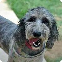Adopt A Pet :: Bootsy - Austin, TX