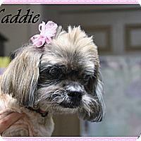 Adopt A Pet :: Maddie - Rockwall, TX