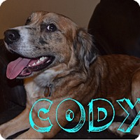 Adopt A Pet :: Cody - Hagerstown, MD