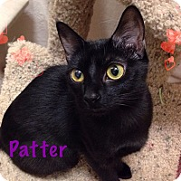 Adopt A Pet :: Patter - Foothill Ranch, CA