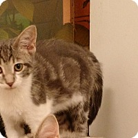 Adopt A Pet :: Voight - Chicago, IL
