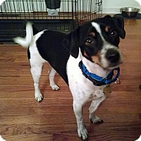 Adopt A Pet :: Jake - Richmond, VA