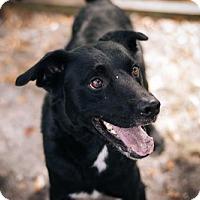 Adopt A Pet :: Bently - New Smyrna Beach, FL