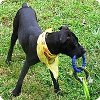 Adopt A Pet :: HUNTER - DeLand, FL