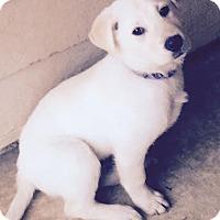 Adopt A Pet :: Cooper - EDEN PRAIRIE, MN