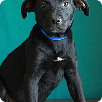 Adopt A Pet :: Jessie - Waldorf, MD