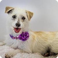 Adopt A Pet :: Sandy - Phelan, CA