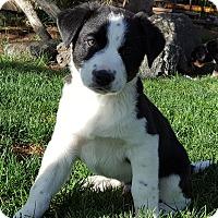 Adopt A Pet :: Dylan - Bend, OR