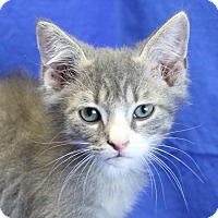 Adopt A Pet :: Cam - Winston-Salem, NC