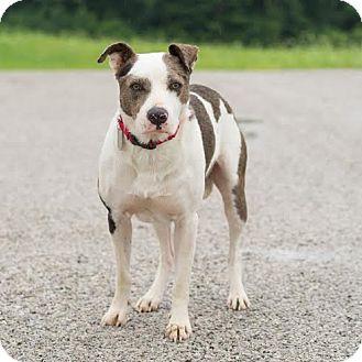 Terrier (Unknown Type, Medium) Mix Dog for adoption in Columbia, Illinois - Sam