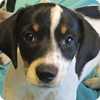 Adopt A Pet :: Cannoli - Harrisonburg, VA