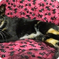Adopt A Pet :: Savannah - Columbus, NE