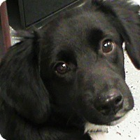 Adopt A Pet :: Shadow - Maynardville, TN