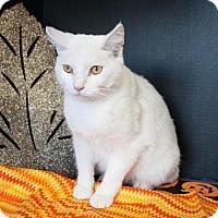 Adopt A Pet :: Spot 2 - Muskegon, MI