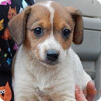 Adopt A Pet :: Zoe (5 lb) Video! - Williamsport, MD