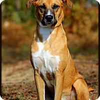Adopt A Pet :: Tessa - Dixon, KY