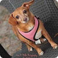 Adopt A Pet :: Penny - Freeport, FL