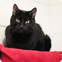 Adopt A Pet :: Maxine - $10! - Midland, MI