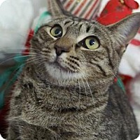 Adopt A Pet :: Katie - Englewood, FL