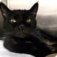 Adopt A Pet :: Puma - Worcester, MA