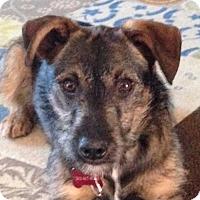 Adopt A Pet :: Jeb - Grafton, WI