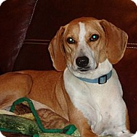 Adopt A Pet :: Carmen - Warrenton, NC