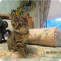 Adopt A Pet :: Jazzmine - Sterling Hgts, MI