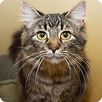 Adopt A Pet :: Cosette - Irvine, CA
