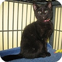 Adopt A Pet :: Carrie - Shelton, WA