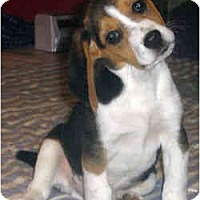 Adopt A Pet :: Wally - Novi, MI