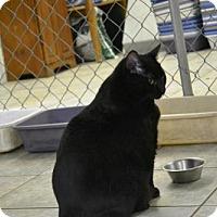 Adopt A Pet :: Jabba - East Smithfield, PA